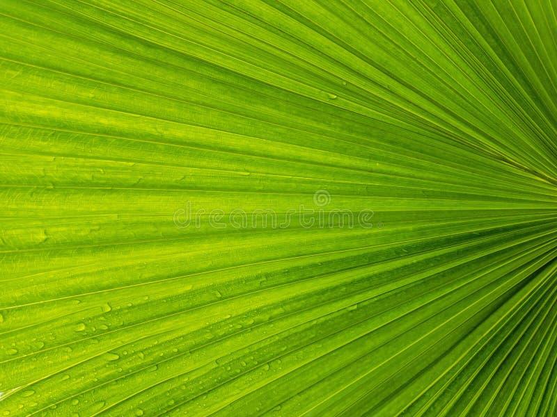 Grüner Blatt-Hintergrund lizenzfreie stockfotos