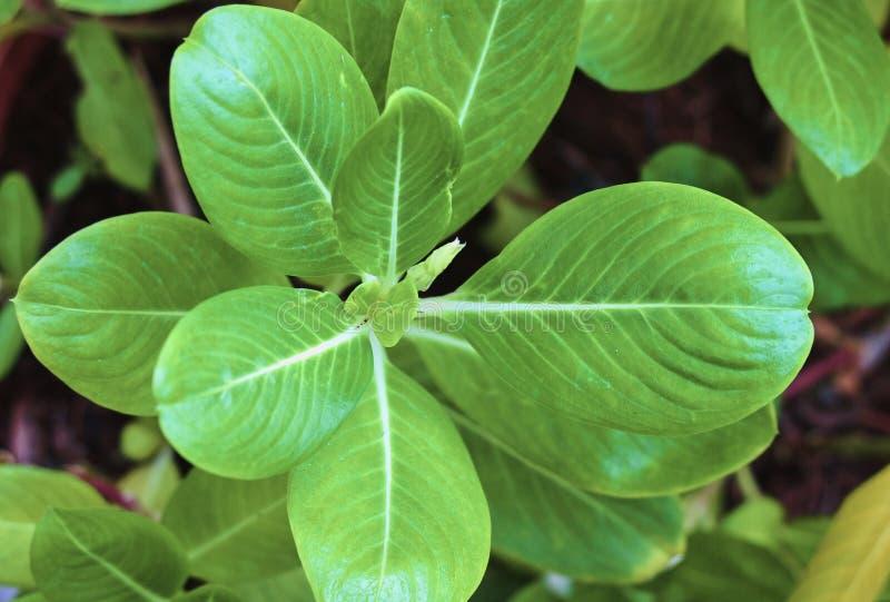 Grüner Blattabschluß der Natur oben lizenzfreies stockbild