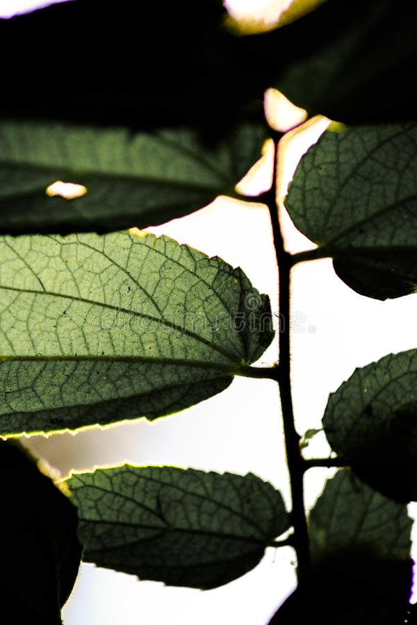 Grüner Blattabschluß oben lizenzfreies stockfoto