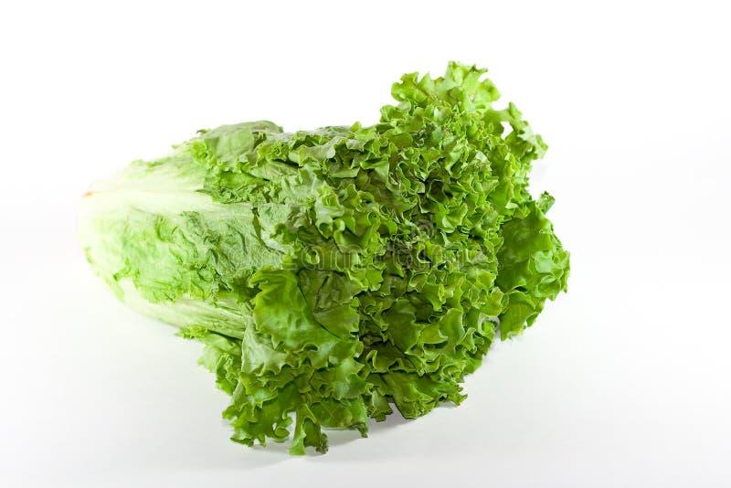 Grüner Blattkopfsalat. lizenzfreies stockfoto