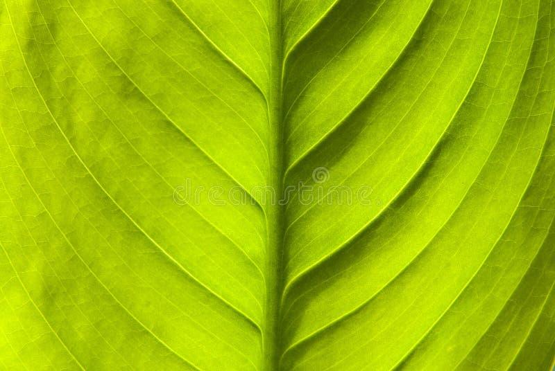 Grüner Blattnaturhintergrund lizenzfreie stockfotos
