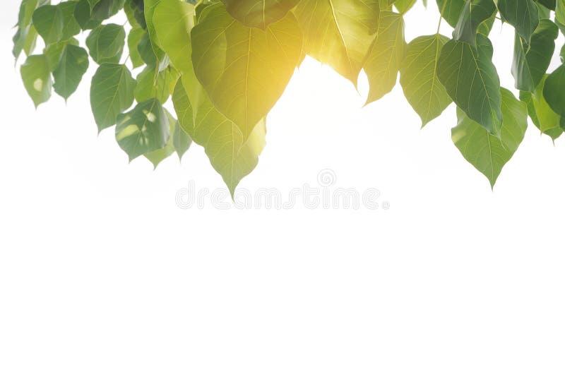Grüner Blattrahmen mit goldenem Sonnenlicht lizenzfreie stockfotos
