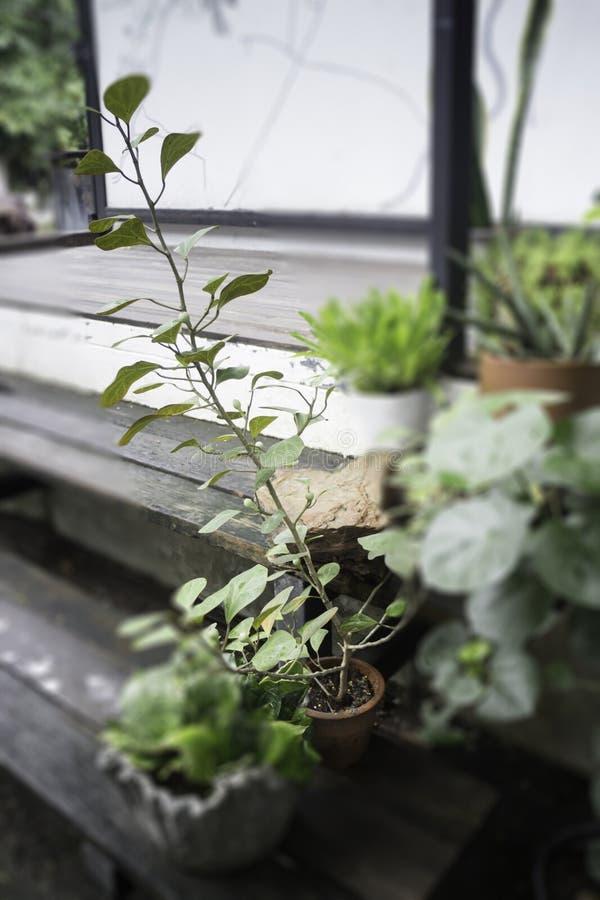 Grüner Blumentopf auf dem Tisch lizenzfreie stockfotografie