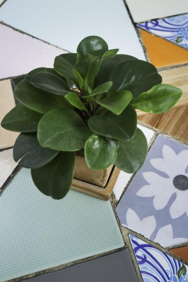 Grüner Blumentopf auf dem Tisch lizenzfreie stockbilder