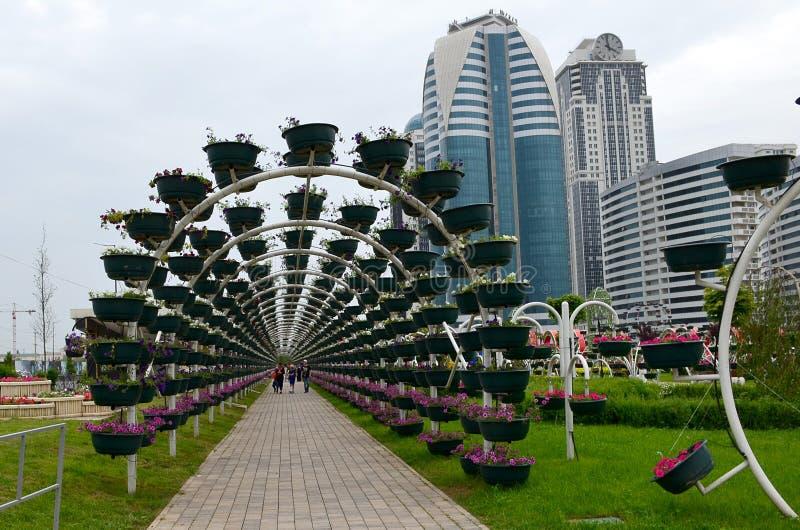 Grüner Bogen im Blumen-Park der Stadt von Grosny, Tschetschenien, Russland Gebäude der komplexen Grosny-Stadt im Hintergrund stockfoto
