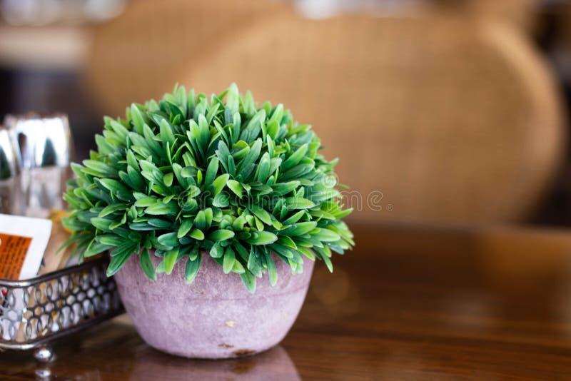 Grüner Busch in einem Topf auf einem Holztisch stockbilder