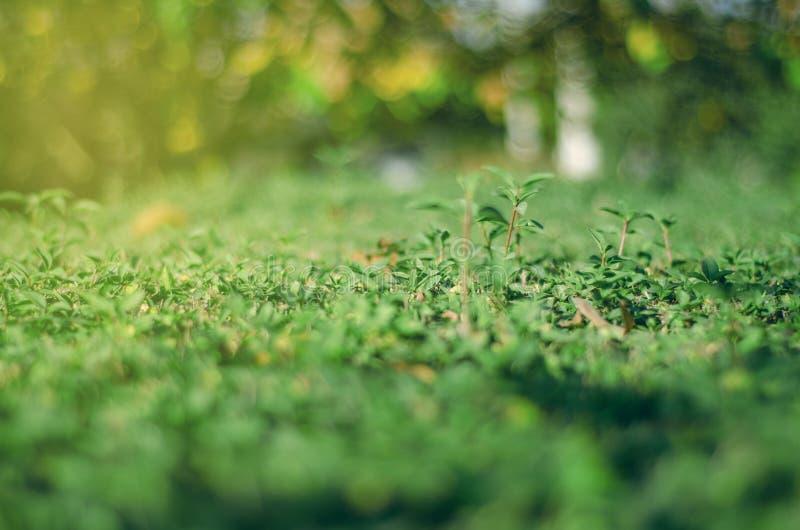 Grüner Buschunschärfehintergrund stockfotos