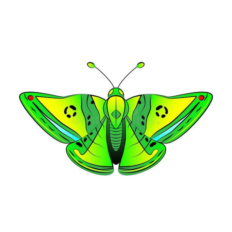Grüner exotischer Schmetterling mit den gelben, blauen und roten Stellen stock abbildung