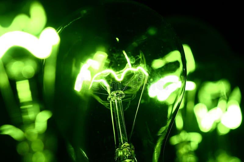 Grüner Fühler stockfotografie
