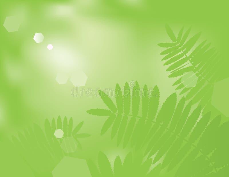 Grüner Farn stock abbildung