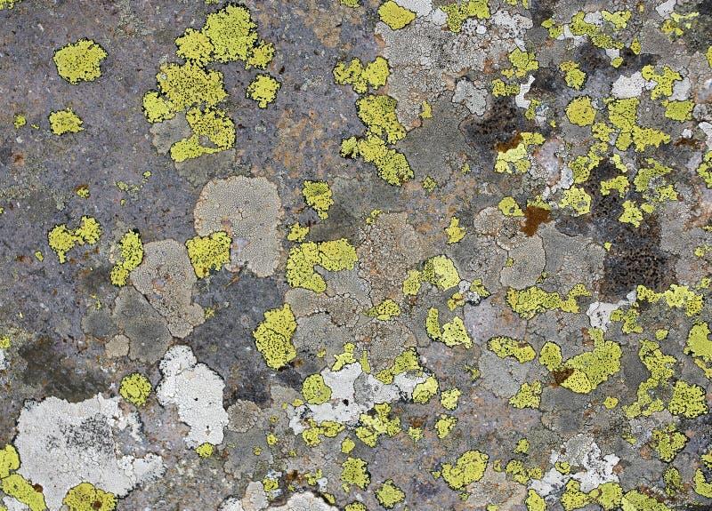 Grüner Flechtenhintergrund im Stein stockbilder