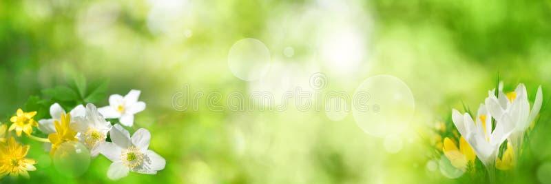 Grüner Frühlingshintergrund mit Blumen stockbilder