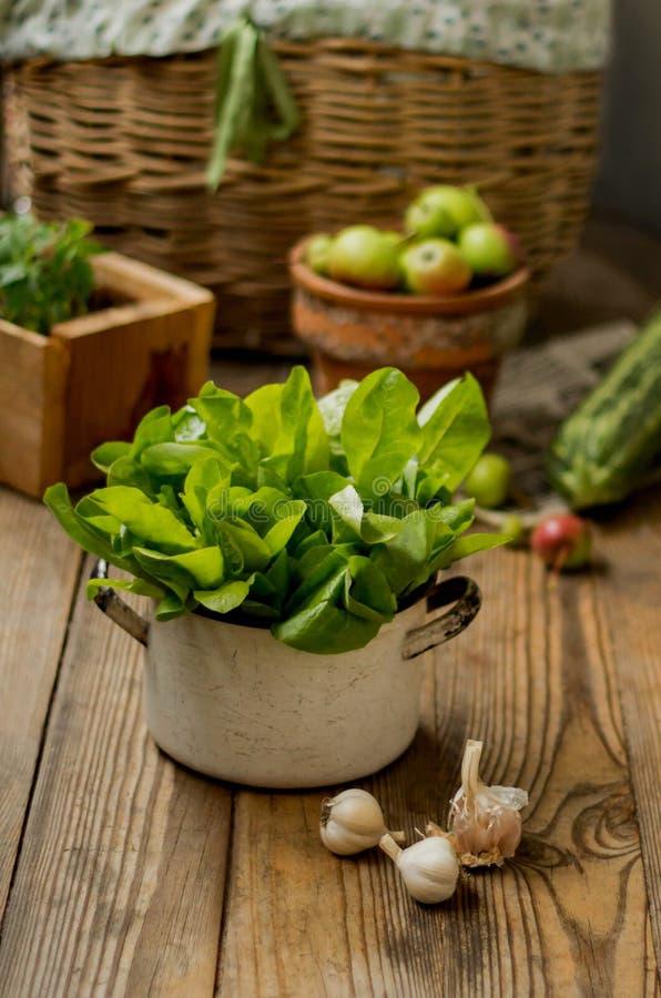 Grüner frischer Blattkopfsalat in einer Metallwanne auf einem hölzernen Hintergrund stockbilder