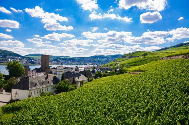 Grüner frischer Weinberg nahe Ruedesheim in Rheinland-Pfalz, Deutschland stockbilder