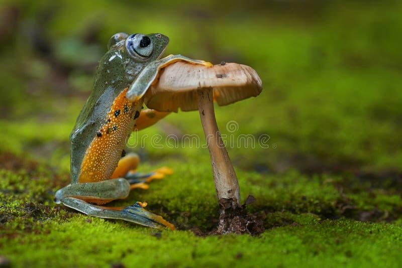 Grüner Frosch, der einen Pilz steht und hält lizenzfreie stockbilder