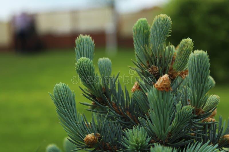 Grüner Garten an meiner Landschaft Ich liebe es lizenzfreie stockbilder