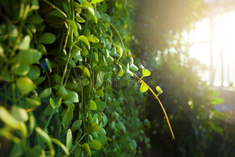 Grüner Garten mit Sonnenlicht lizenzfreies stockbild