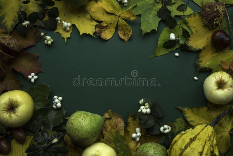 Grüner gelber Draufsichthintergrund der Herbsternte lizenzfreie stockfotografie