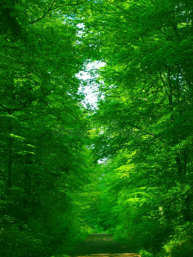 Grüner grüner Wald lizenzfreie stockfotografie