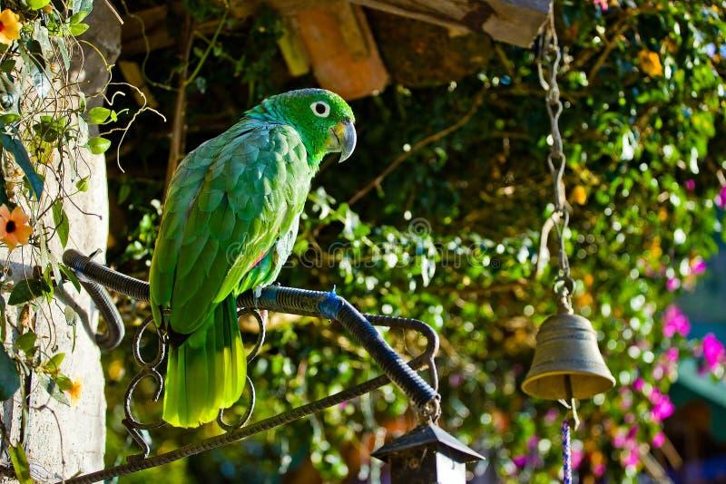 Grüner großer Papagei stockfoto