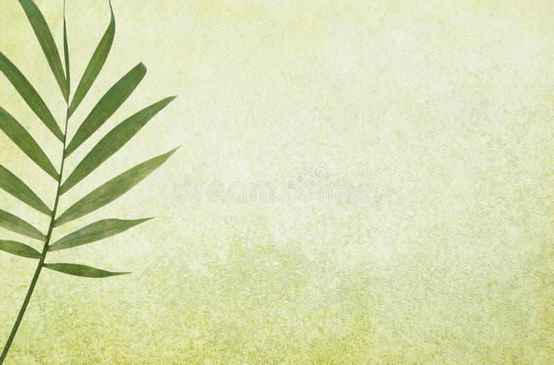 Grüner Grunge Hintergrund mit Palmblatt lizenzfreie stockfotografie