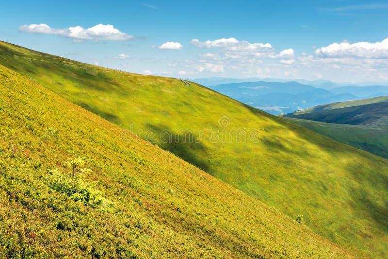 Grüner Hügel und Steigungen in der Sommerzeit stockbild