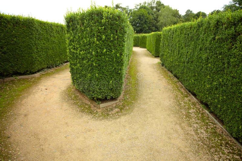 Grüner Hecke Flowerbed stockbild