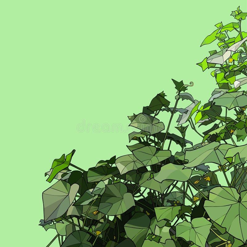 Grüner Hintergrund mit Dickichten von den Gurkenanlagen gemalt auf der Seite stock abbildung