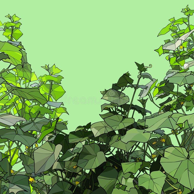 Grüner Hintergrund mit gemalten Dickichtgurkenanlagen stock abbildung