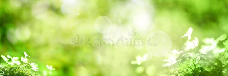 Grüner Hintergrund mit kleinen Blumen stockfoto