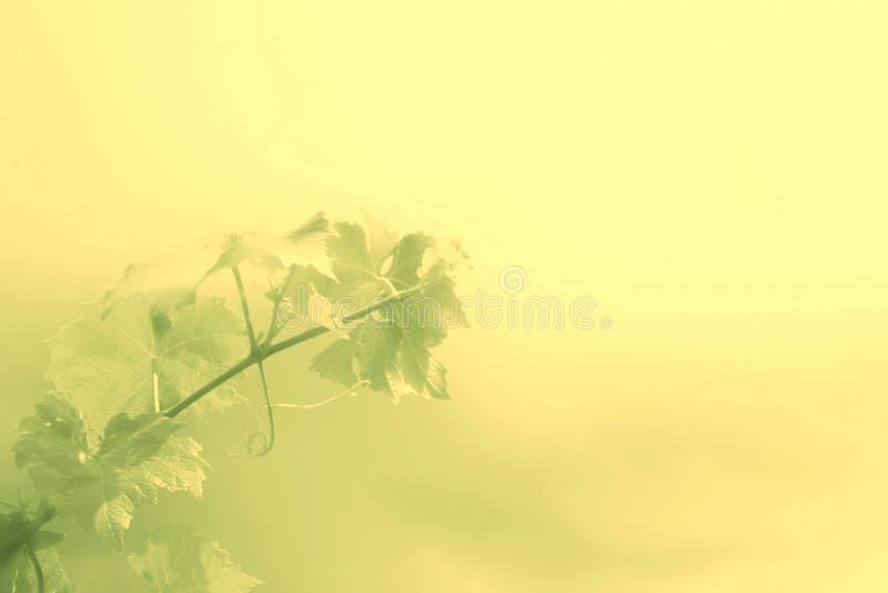 Grüner Hintergrund mit Niederlassung von als Hintergrund für Alkoholiker- oder Weinmenü lizenzfreie stockbilder