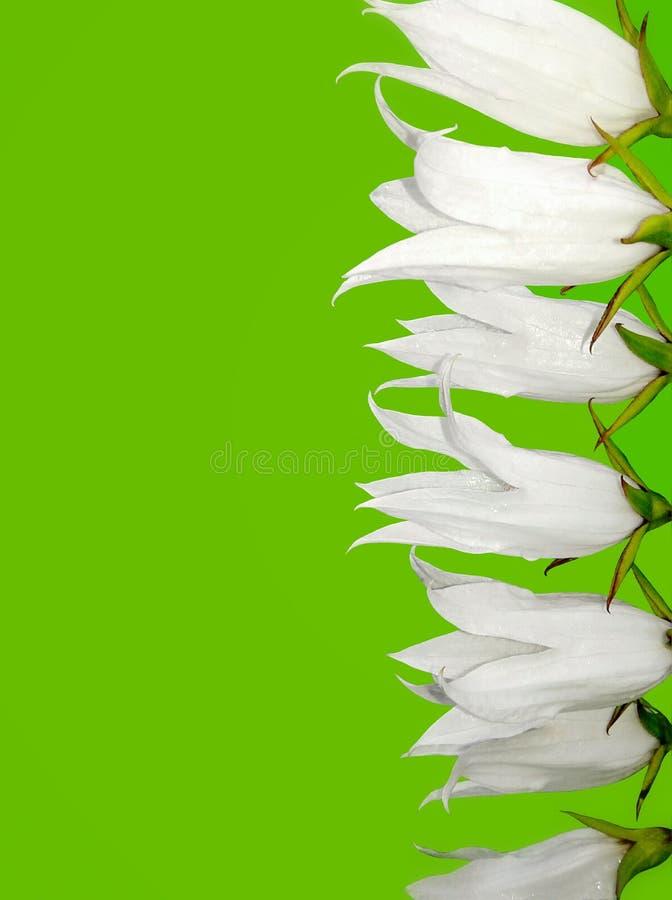 Grüner Hintergrund mit weißen Blumen stockbilder