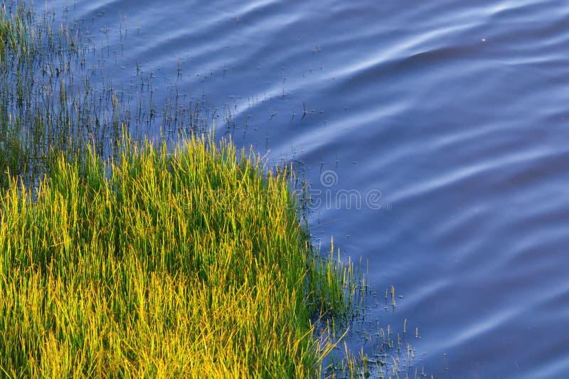 Download Grüner Horsetail Auf Der Flussquerneigung Stockfoto - Bild von anstürme, querneigung: 27727686
