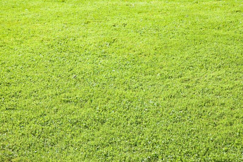 Grüner irischer wilder Rasenflächehintergrund in der Sommersaison Irland - Europa lizenzfreie stockbilder