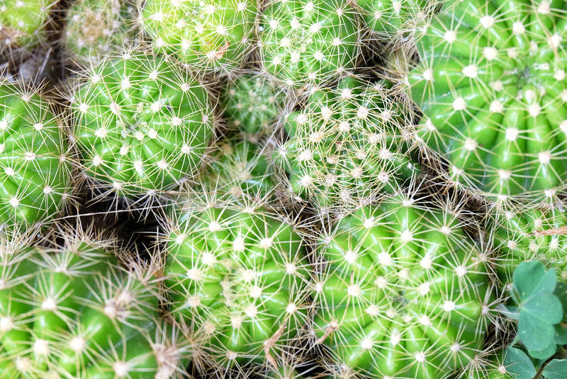 Grüner Kaktus am über-rechten im Rahmen lizenzfreies stockbild