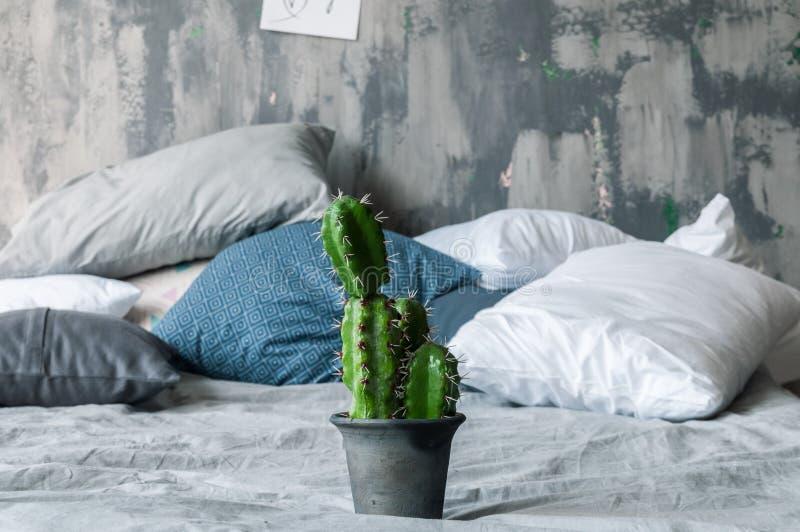 Grüner Kaktus auf dem Bett im Dachbodenraum lizenzfreie stockfotografie