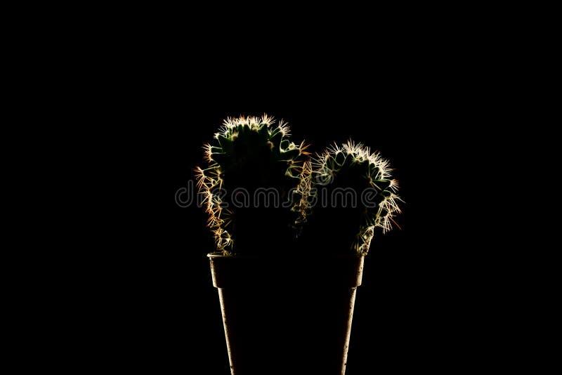 Grüner Kaktus mit den weißen Spitzen lokalisiert auf dem Schwarzen lizenzfreie stockfotografie
