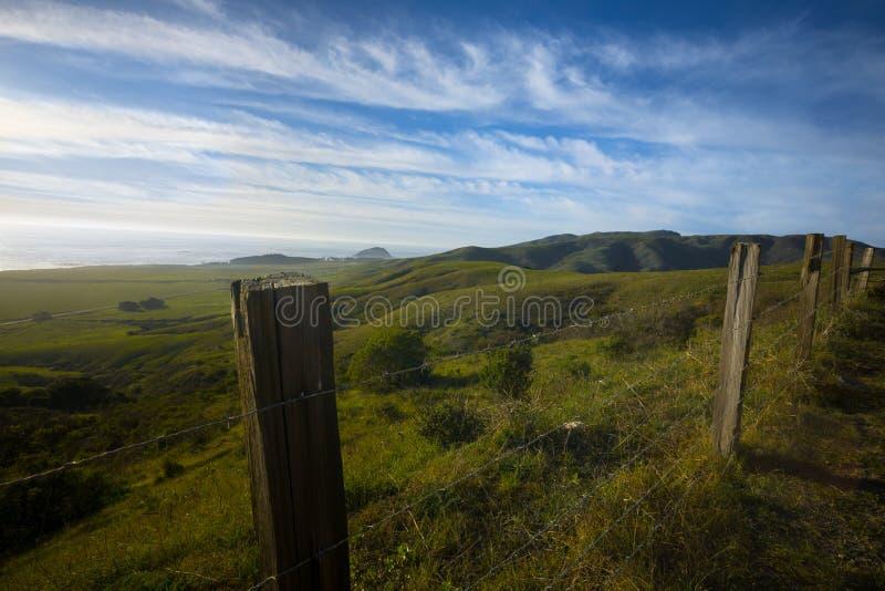 Grüner Kalifornien-Abhang stockfoto