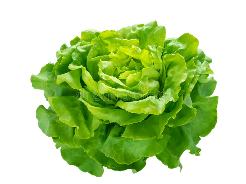 Grüner Kopfsalatsalatkopf stockfotos