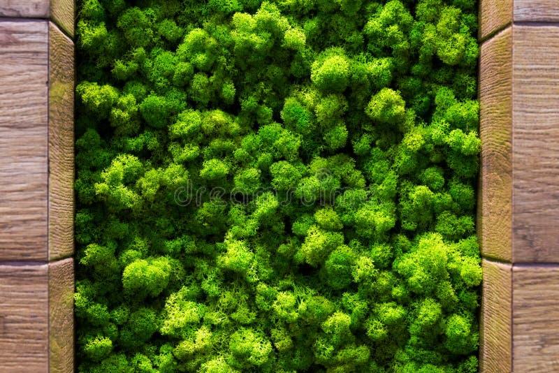 Grüner Moos backgruond Abschluss herauf Innenarchitektur Draufsichtabschluß oben stockfoto
