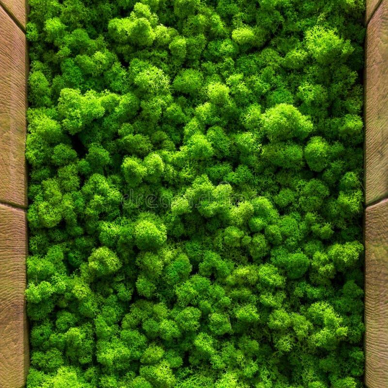 Grüner Mooshintergrund-Beschaffenheitsabschluß herauf Innenarchitektur der Draufsicht stockbilder