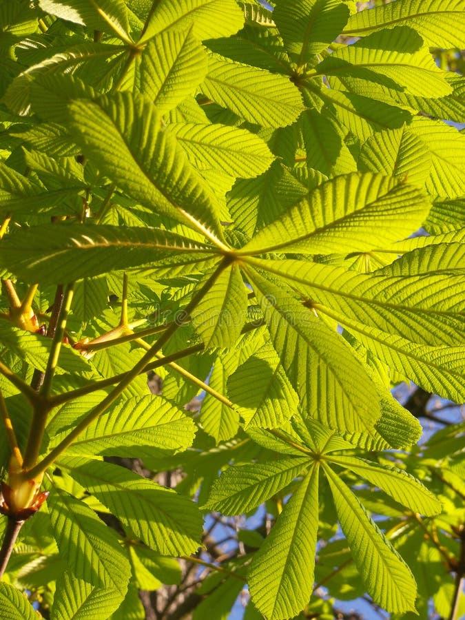 Grüner Morgen stockbild