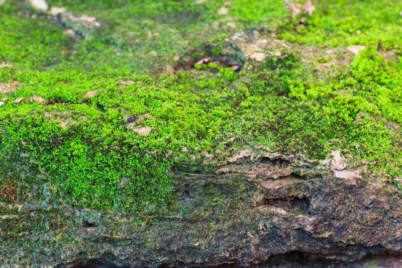 Grüner MOS auf Felsensteinbeschaffenheit stockbild