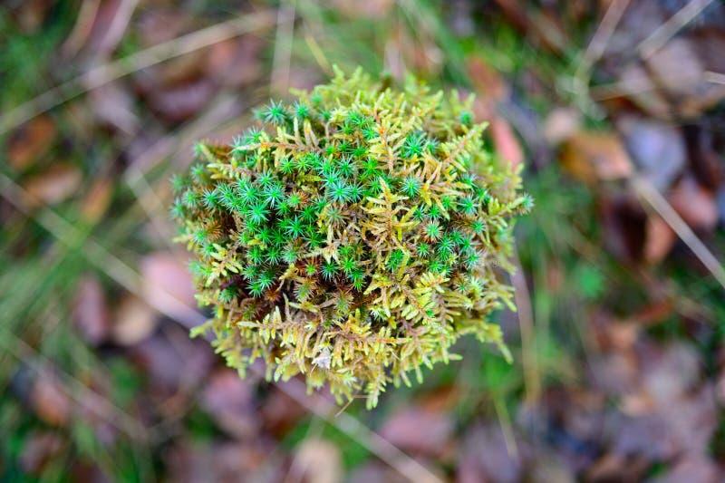 Grüner Moss Autumn bedeckte Entziehen Sie Hintergrundbeschaffenheit lizenzfreies stockfoto