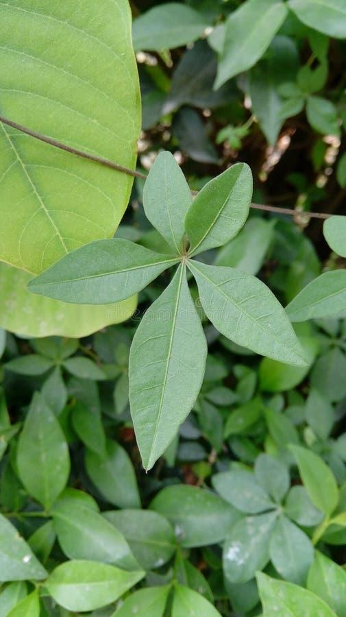 Grüner natürlicher Busch lizenzfreies stockbild