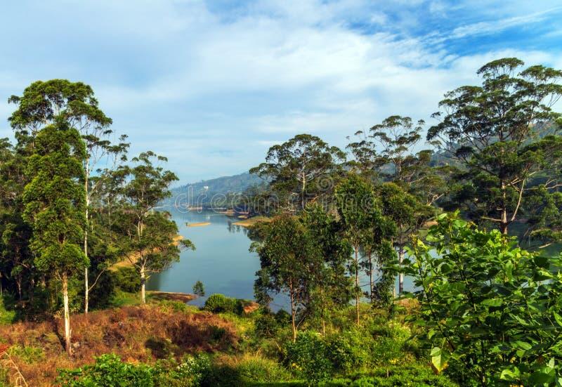 Grüner Naturlandschaftswald stockfoto