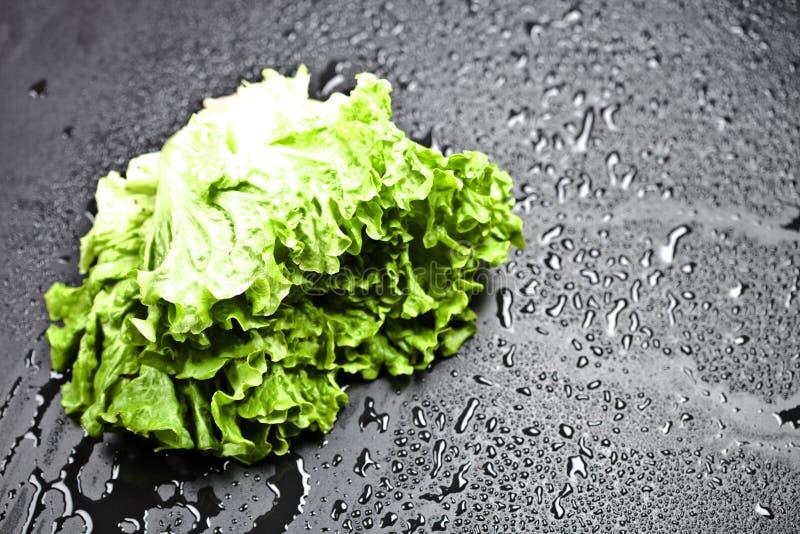 Gr?ner organischer Kopfsalatsalat mit Wassertropfen auf schwarzem Hintergrund lizenzfreie stockfotografie