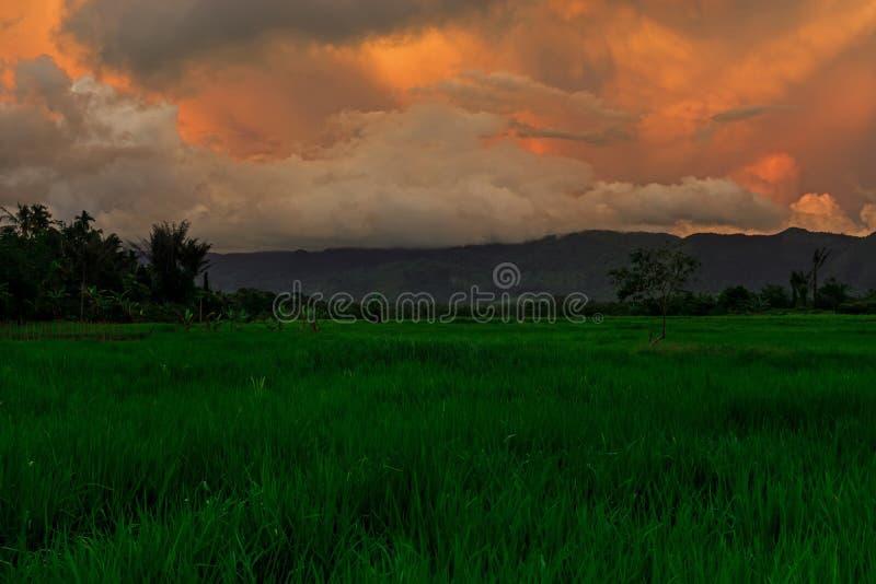 Grüner Paddy Field With Golden Sky lizenzfreie stockfotografie