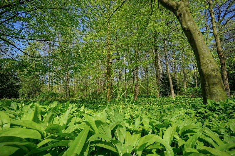 Grüner Park stockbilder