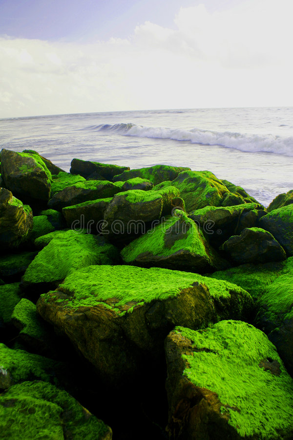 Grüner Pelz lizenzfreie stockbilder